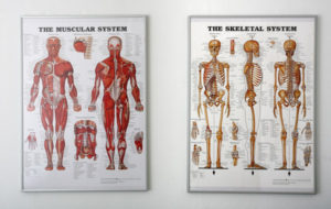 Auto Injury Treatment FL Complete Care Skeletal System